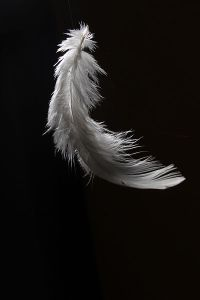 400px-Feather2